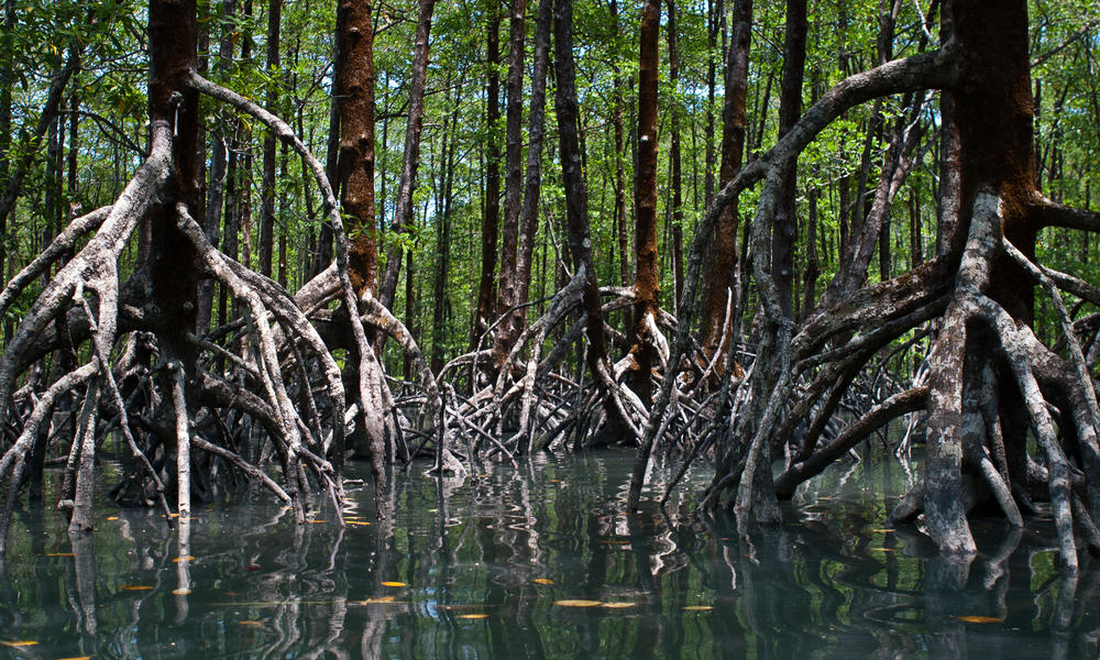Mangroves along the coastlines of Myanmmar