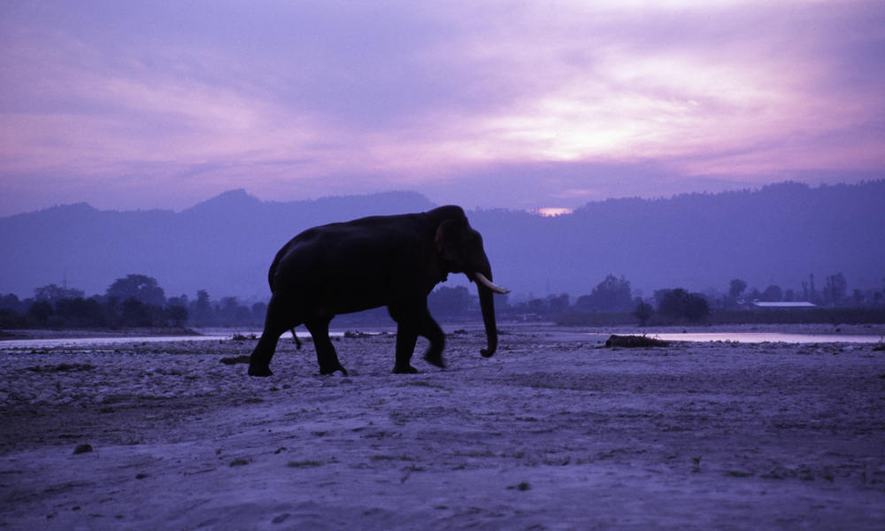 Elephant at sunset 103872