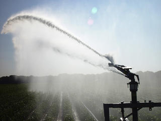 Sprinkler irrigation watering crops on farm