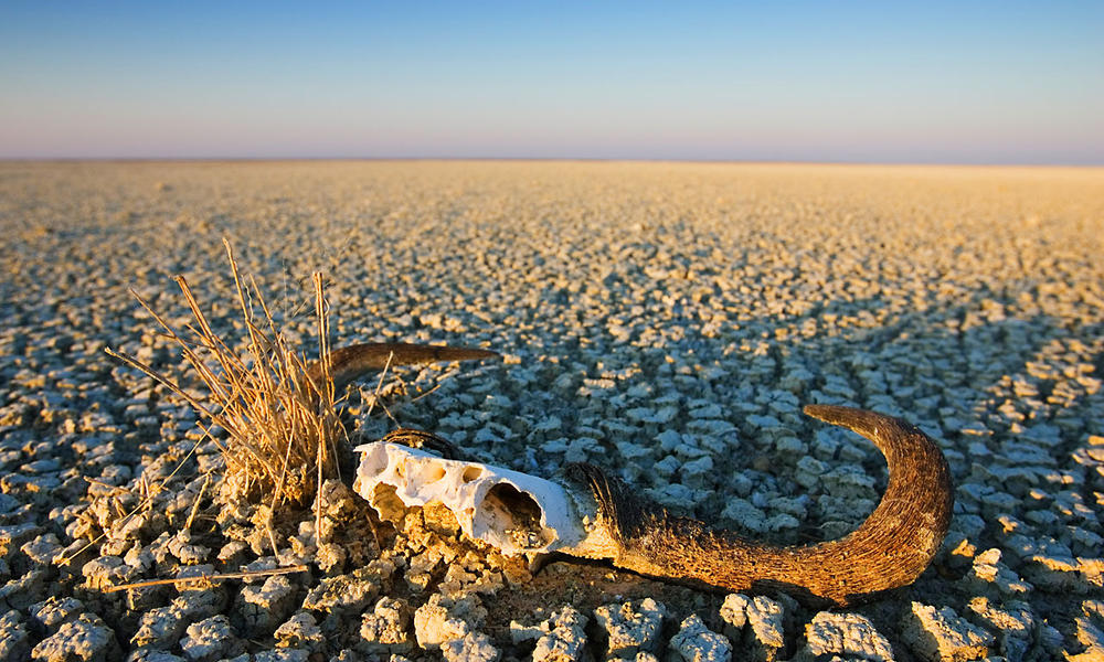 Animal skull on cracked earth, dry landscape. Namibia.