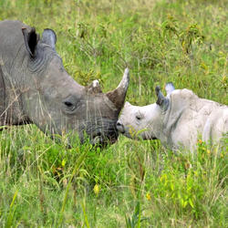 2016-06-drtv-rhino-baby-and-mom