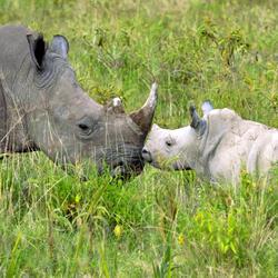 2016-06-drtv-rhino-baby-and-mom