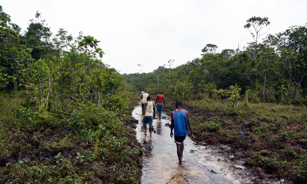 an elephant boulevard in Salonga National Park