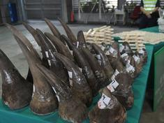 2016 06 drtv rhino horn