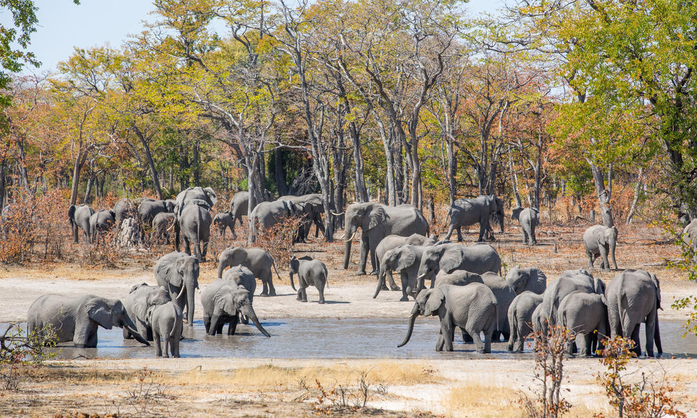 Global momentum in elephant conservation   Stories   WWF