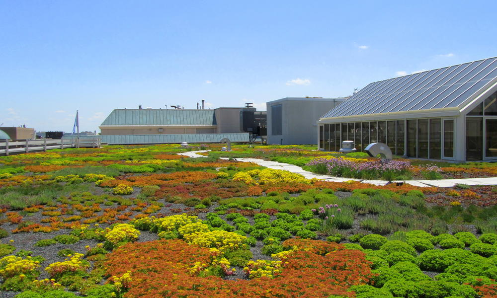 Green HQ green roof