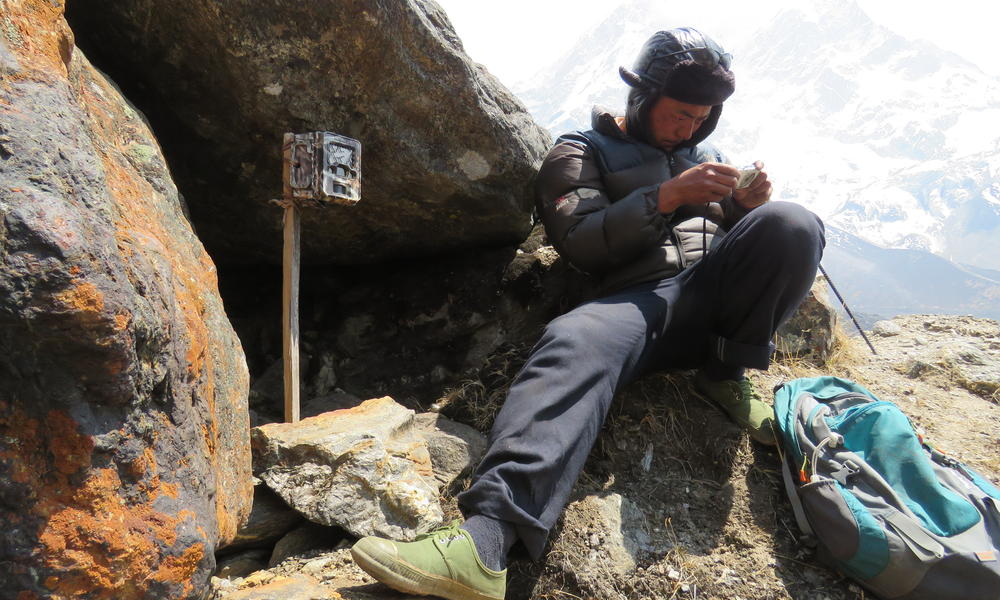 Local citizen scientists were instrumental in tracking snow leopard movements through camera traps installed by them in are