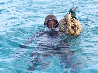 Diver holding lobsters in ocean.