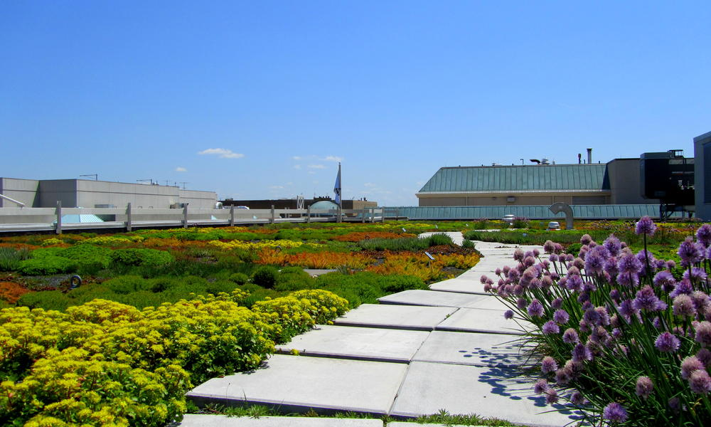 WWF HQ green roof