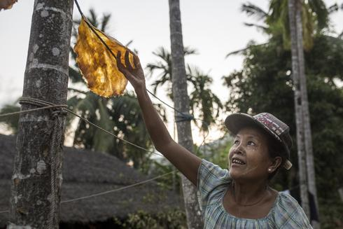 woman picking fruit