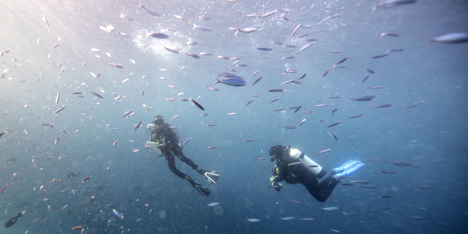 Effects of Marine Protected Areas | Magazine Articles | WWF