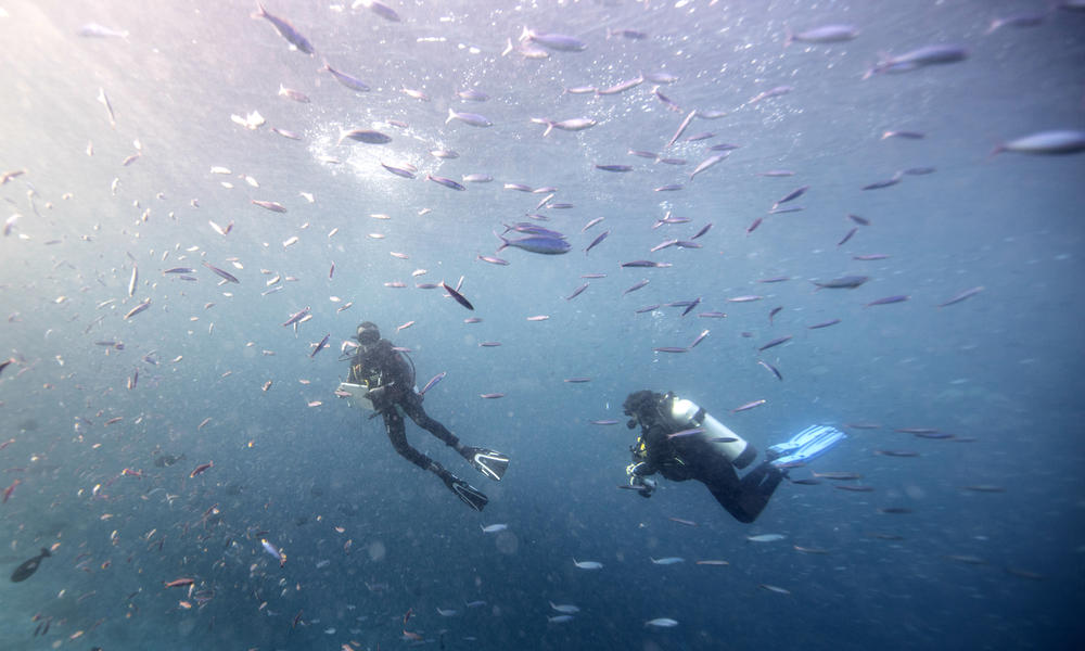 Gabby and lius surveying fish fa16 magazine