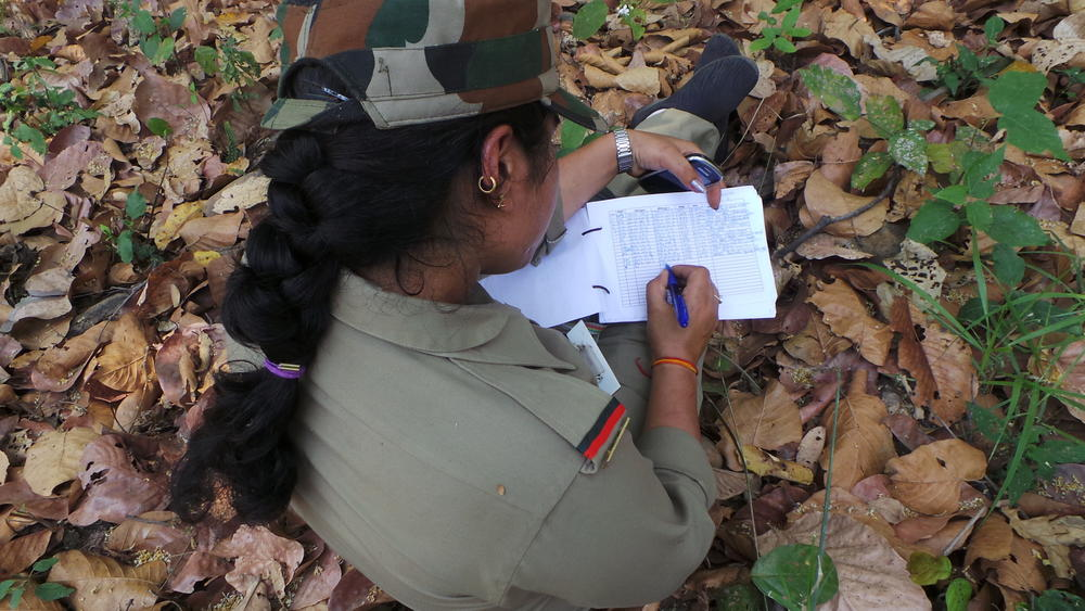 Ranger recording patrol data in rajaji national park  india %28 %c2%ae rohit singh   wwf%29
