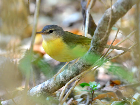 Bird in Madagascar