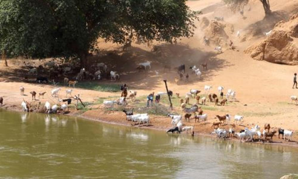 Tanzanian farmers and their livestock rely on the Great Ruaha River. As in Zambia, competing demands on water are stressing this precious resource.