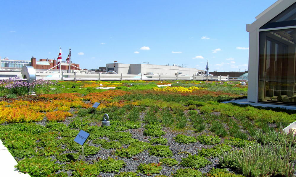 WWF HQ green roof Weight Garden Wide View Enhanced