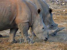 Wwfevents 091516 rhinos