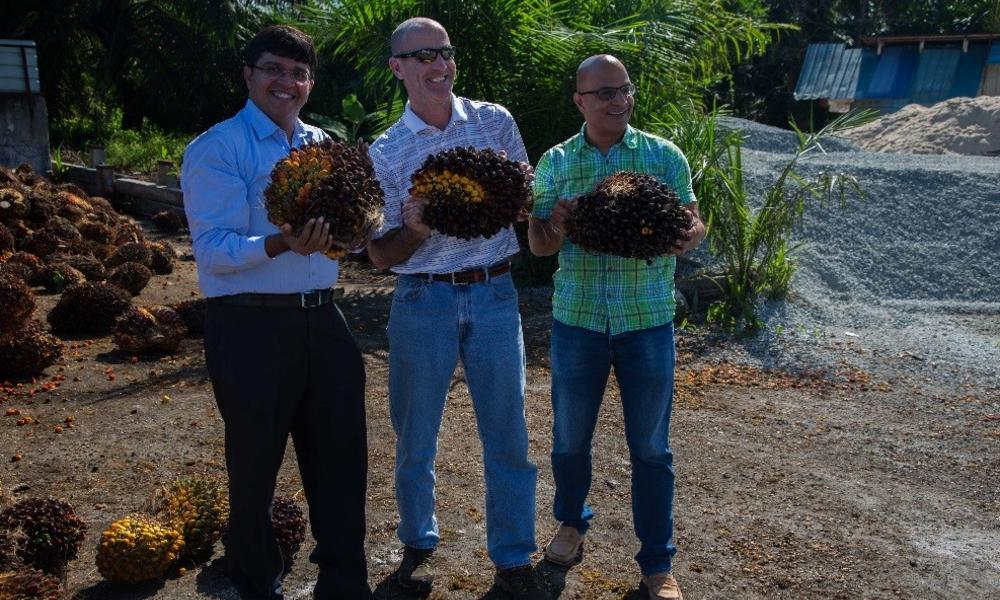 P&G Staff with palm oil bunches