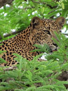 Sri Lanka Safari Travel