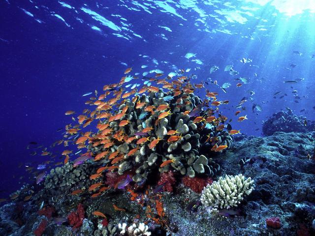 Ocean Habitat   Habitats   WWF