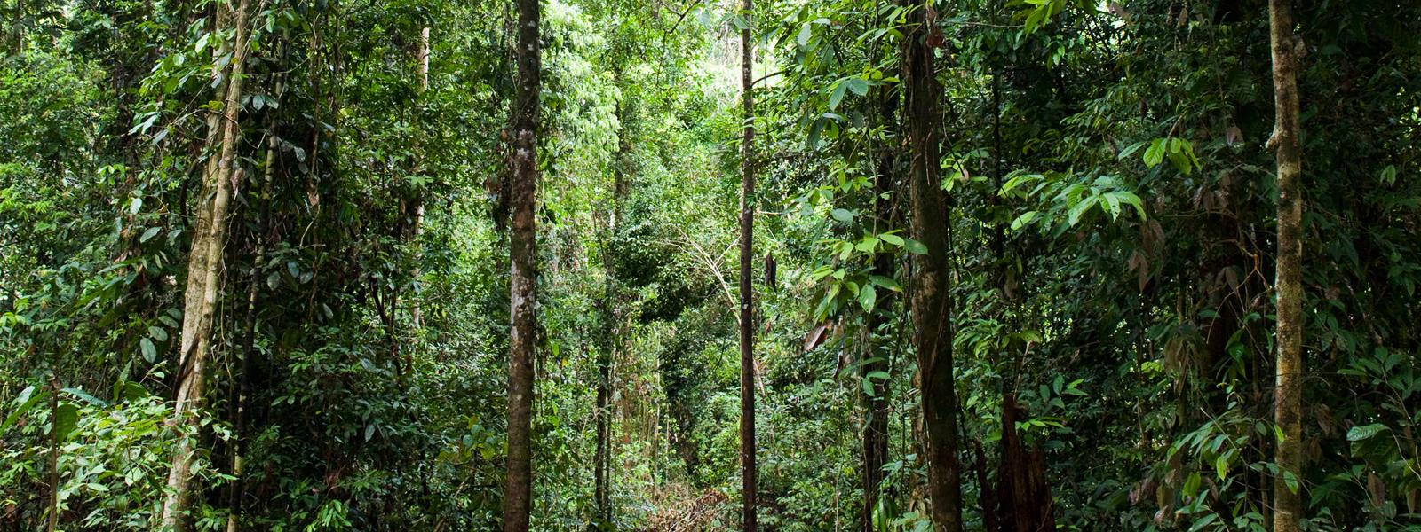 forest habitat habitats wwf forest east kalimantan borneo