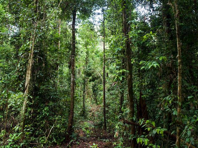 Forest Habitat | Habitats | WWF