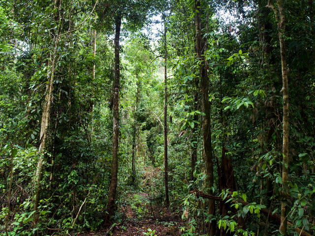Forest, East Kalimantan, Borneo