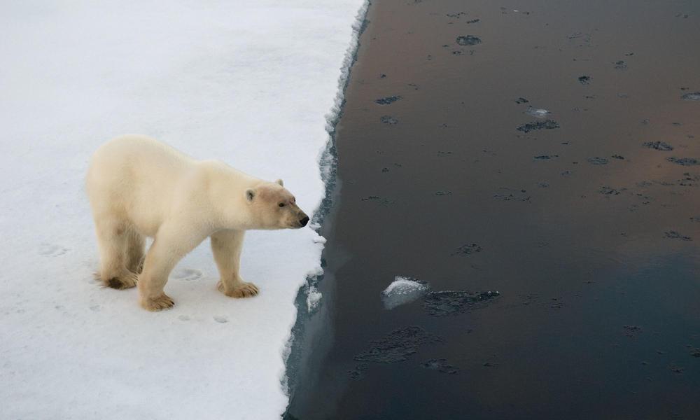 Polar bear on edge of an ice floe