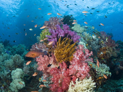 Coral Reefs Inquiry Mermaid Winter 2016 Magazine