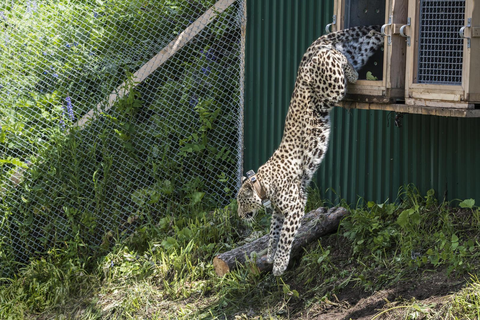 Leopard jump winter2016 magazine