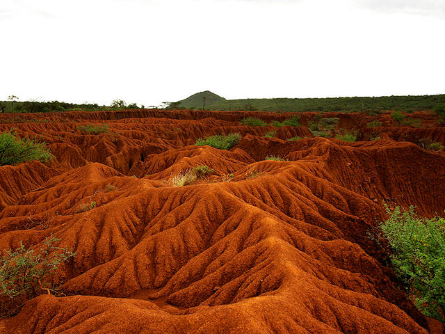 Soil Erosion and Degradation | Threats | WWF