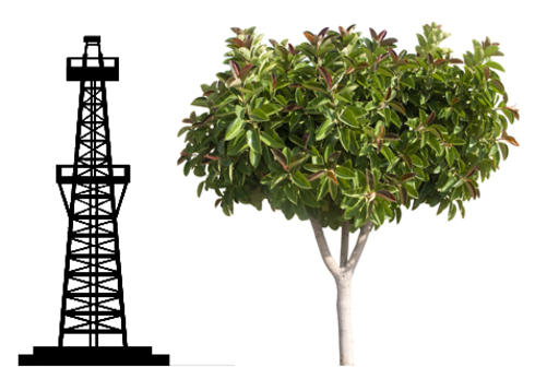 Oil derrick and rubber tree