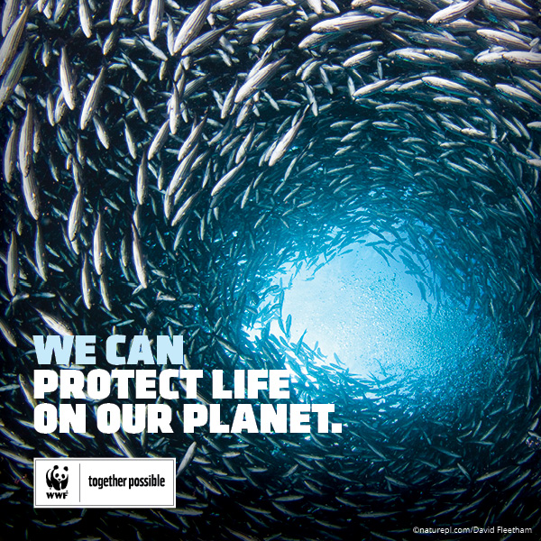 Image result for wwf ocean poster