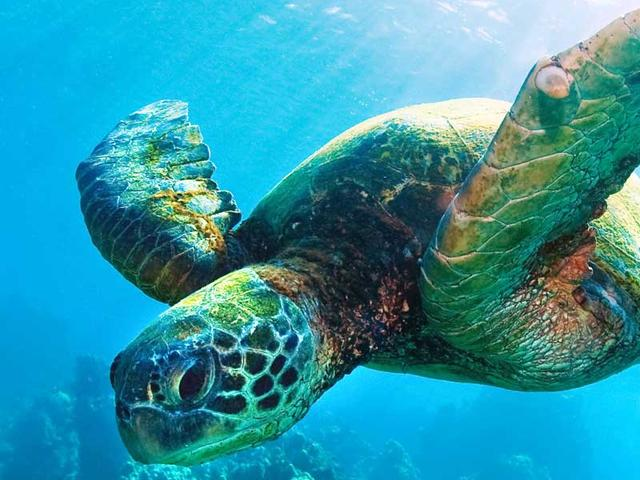 Sea Turtle | Species | WWF