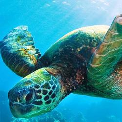 Help Marine Turtles by supporting WWF