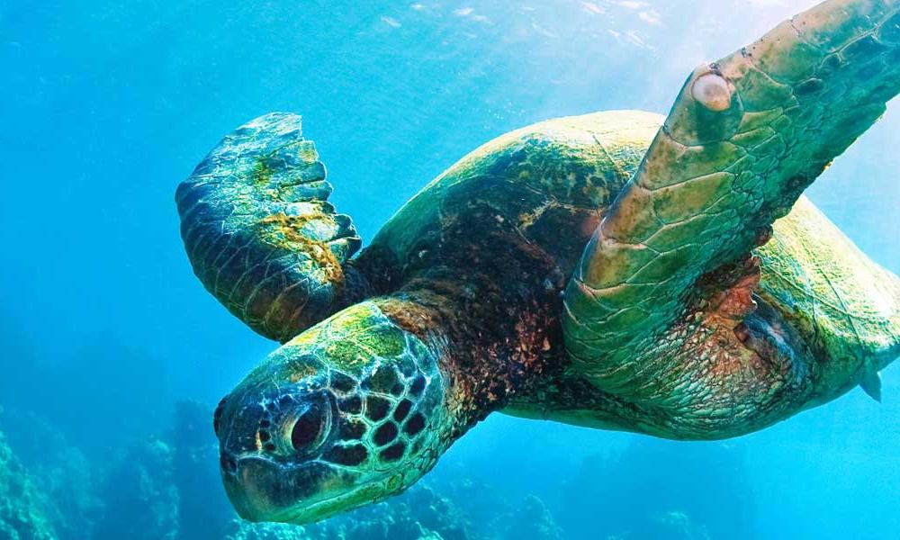 Seaturtle 1600x600px