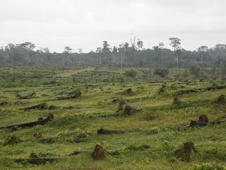 Coastal tropical rainforest
