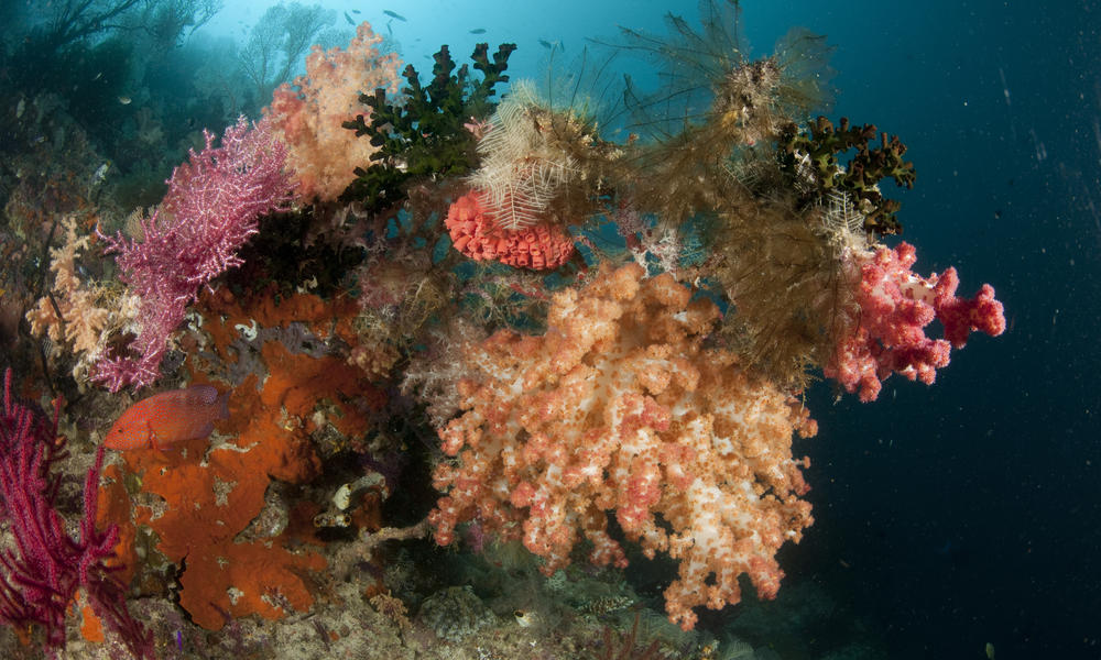 Overfishing, coral reefs