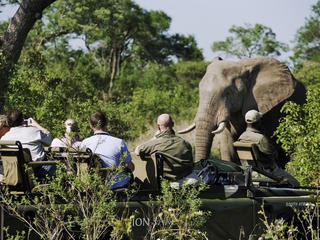 tourists watching elephants