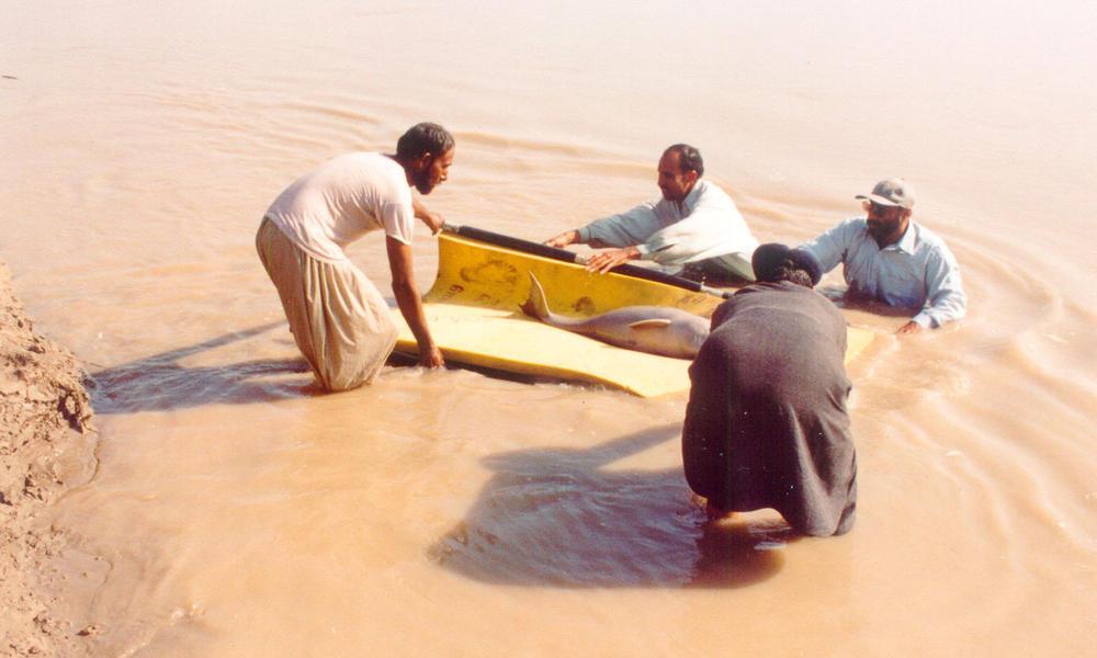 Indus River Dolphin | Species | WWF
