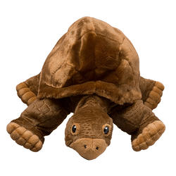 How to help tortoise