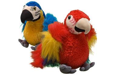 Macaw | Species | WWF