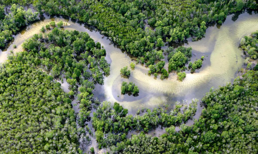 A mangrove forest in Tanzania