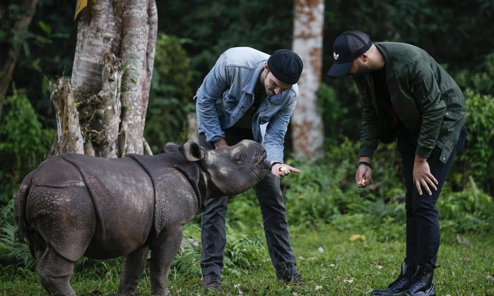 Nicholas Hoult feeding a baby rhino