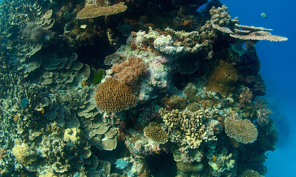 A new way to predict and prevent the end of coral reefs