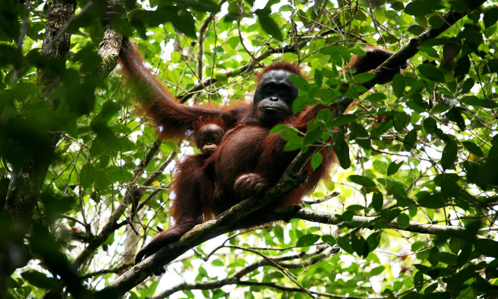 Living Among The Trees Five Animals That Depend On