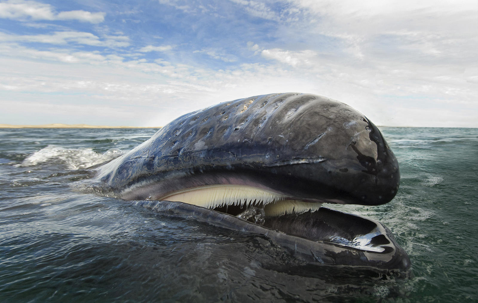 New US regulations offer better protection from bycatch ...