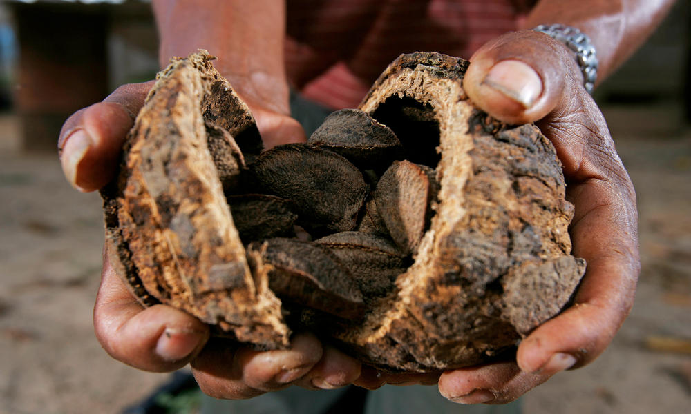 Sustainably harvested Brazil nuts in Peru.