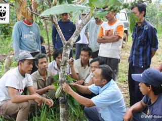Sharing cocoa cultivation best practices with farmers association  Lampung  Indonesia WWF-Indonesia-Nurman 249655