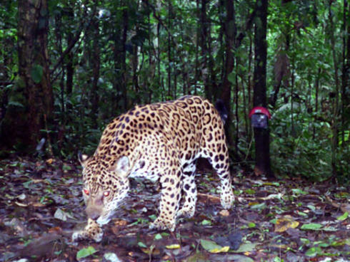 Photos From Camera Traps In Ecuador Projects Wwf